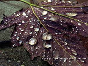 Liść, krople deszczu